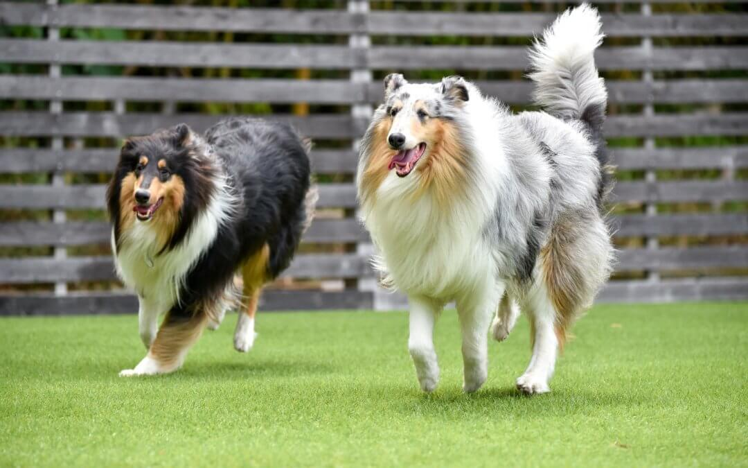 Say Goodbye to Wet and Muddy Lawns with Artificial Grass for Dogs in Tampa